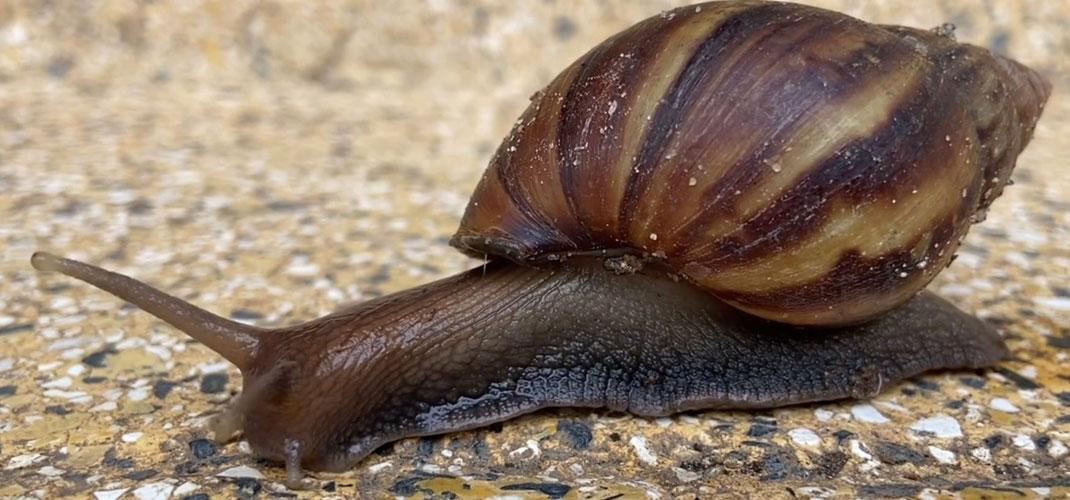 A Snail's Pace